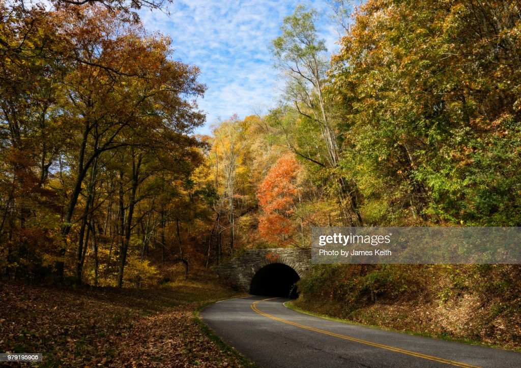 A roadway leading into a tunnel lined with trees in their autumn glory. : Stock Photo