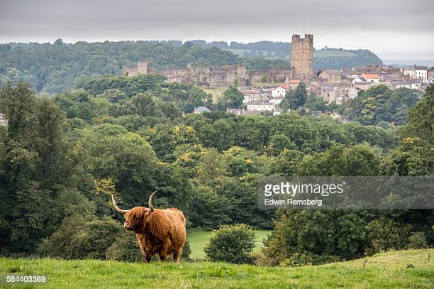 roaming cattle - castle stock pictures, royalty-free photos & images