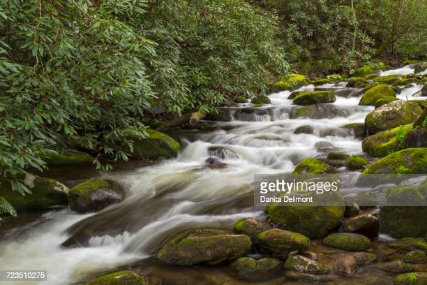 roaring fork flowing over moss covered boulders, roaring fork motor nature trail, great smoky mountains national park, tennessee, usa - roaring fork motor nature trail stock pictures, royalty-free photos & images