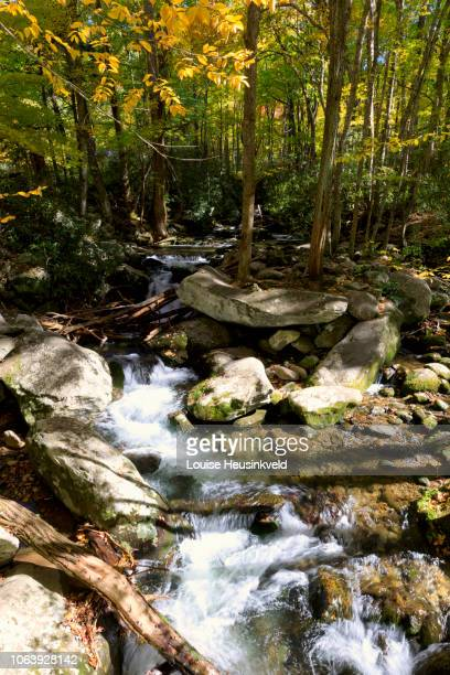 roaring fork motor nature trail in autumn, smoky mountains national park - roaring fork motor nature trail stock pictures, royalty-free photos & images