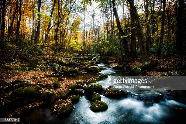 roaring fork motor nature trail - roaring fork motor nature trail stock pictures, royalty-free photos & images