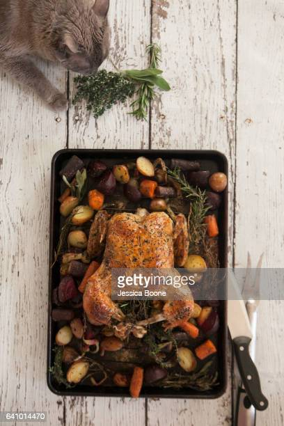 roast chicken - thanksgiving cat stock pictures, royalty-free photos & images