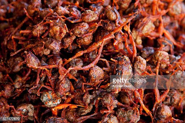 Roasted ants available in a street stall by the ferry crossing the Mekong river delta Roasted spiders and large insects are a delicacy in Cambodia...