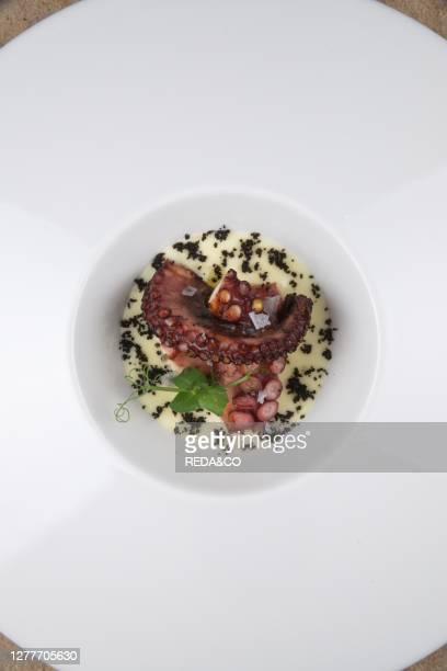 Roasted rock octopus potato fudge and taggiasca powderControcorrente restaurant Liguria Italy Europe