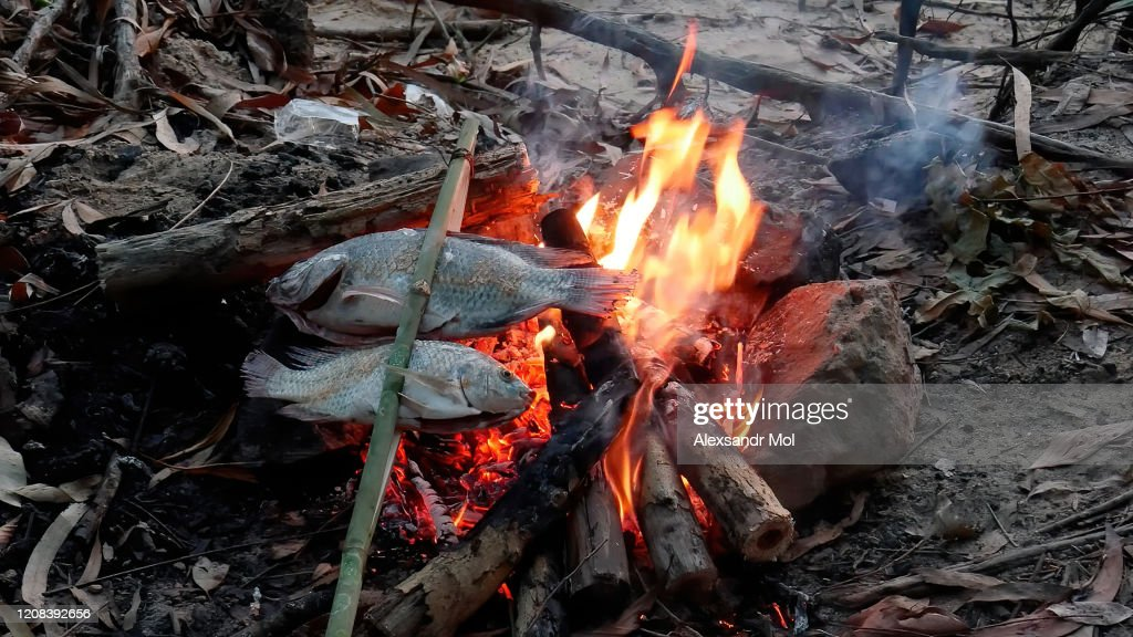 Roasting fish on a fire in field conditions : Stock Photo