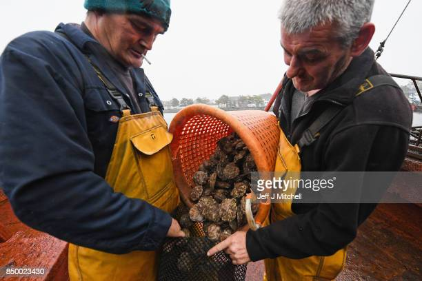 Rob Lamont and John Mills dredge Scotland's last wild native oyster fishery from the 1970s Clyde built trawler the 'Vital Spark' on September 202017...