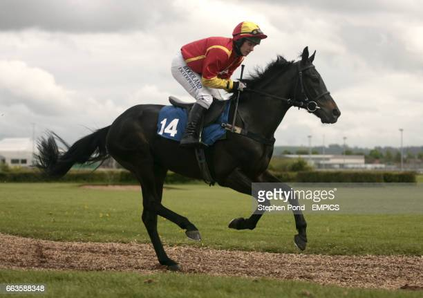 Robbmaa ridden by Matthew Batchelor going to post for the Rose Lion In Bromyard Novices' Handicap Hurdle