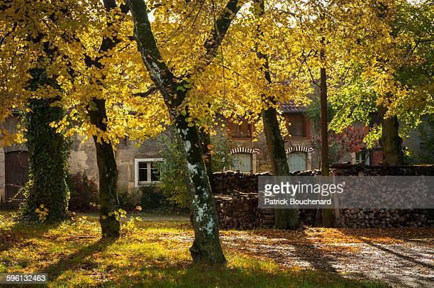 Robe d'automne