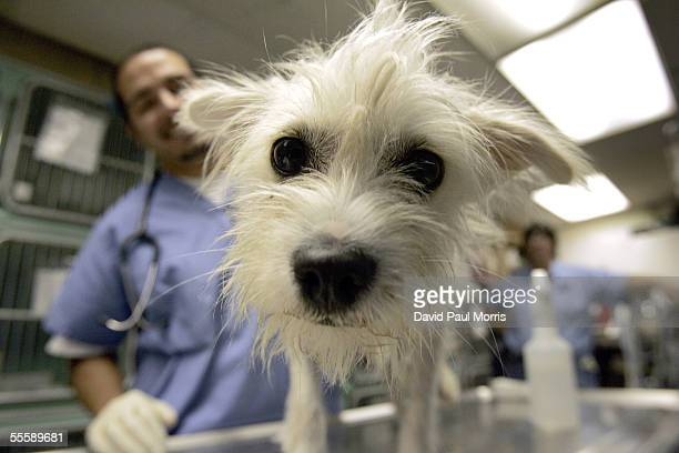 Robert Cadillo stands behind a dog that was displaced from Hurricane Katrina stands on a table at the Humane Society Silicon Valley on September 15...