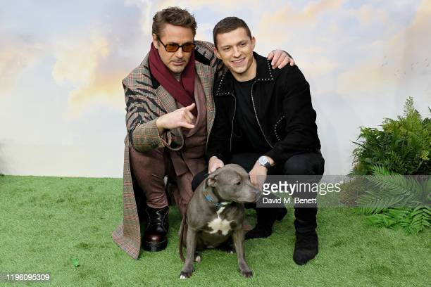 """Robert Downey Jr. And Tom Holland attend a special screening of """"Dolittle"""" at Cineworld Leicester Square on January 25, 2020 in London, England."""