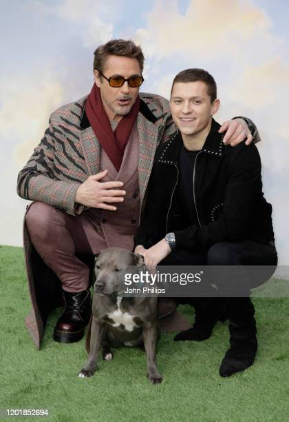 Robert Downey Jr and Tom Holland attend the Dolittle special screening at Cineworld Leicester Square on January 25 2020 in London England