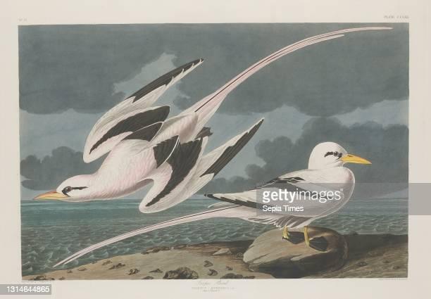 Robert Havell, Jr., , American, born England, 1793 - 1878, John James Audubon, , American, 1785 - 1851, Tropic Bird, The Birds of America: Plate...