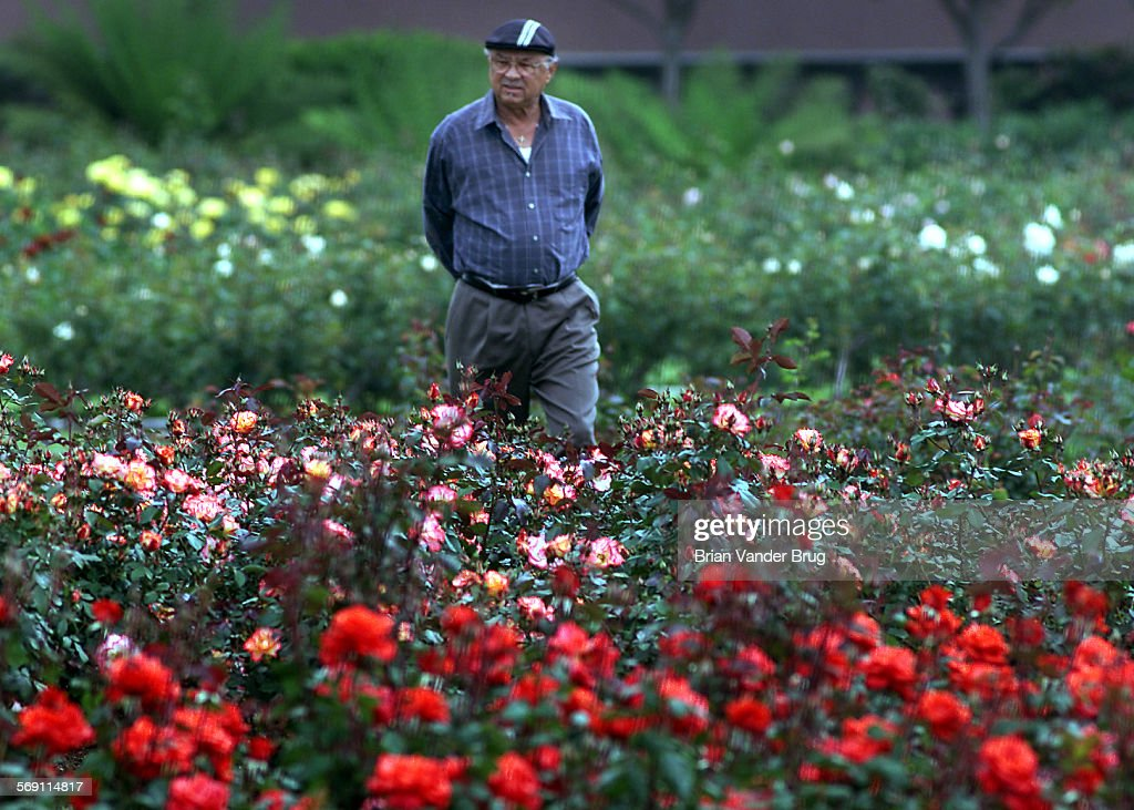 Robert Smith of Los Angeles strolls through the rose garden during ...