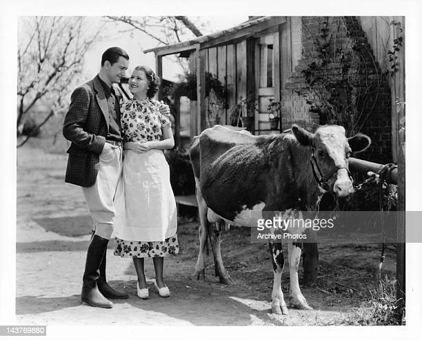 Robert Young holding Betty Furness next to cow outside in a scene from the film 'The Three Wise Guys', 1936.