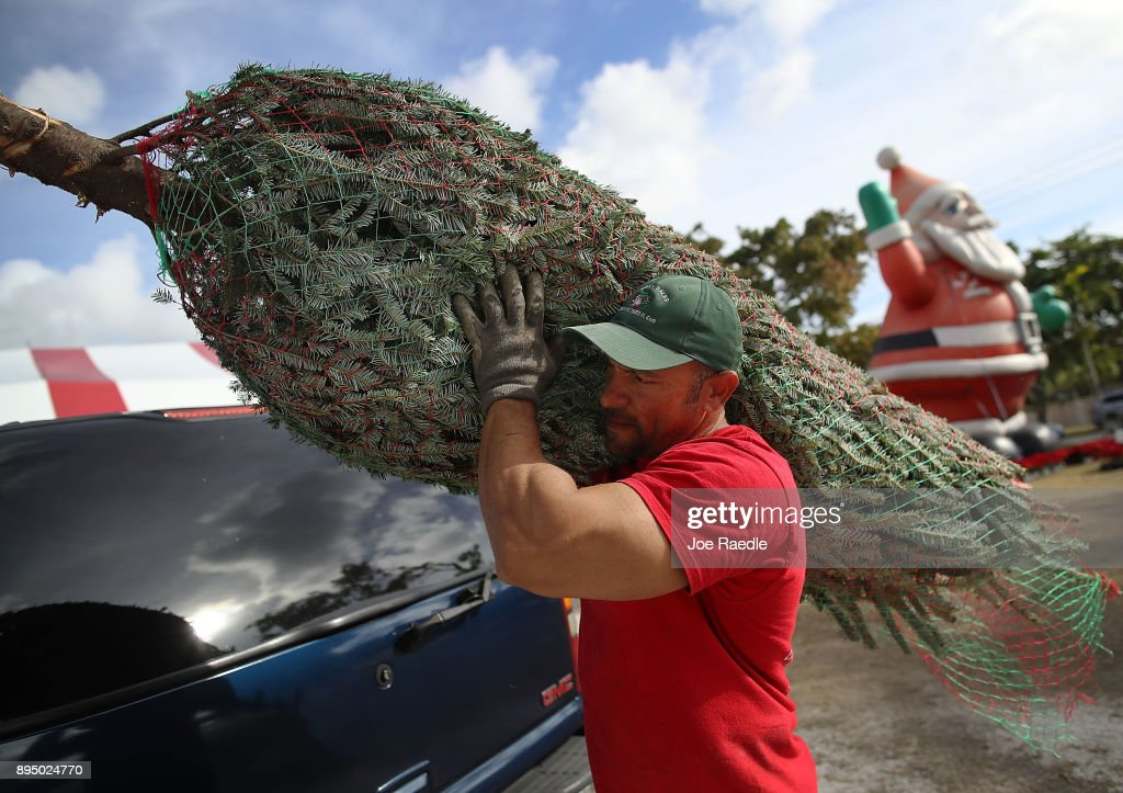 roberto marques carries a tree as he helps a customer shop for a christmas tree on
