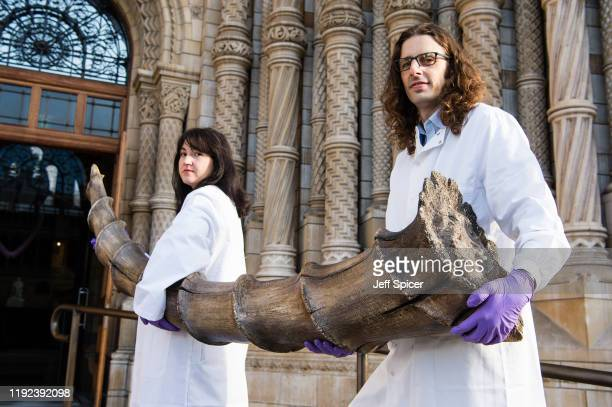 Roberto Portela Miguez and Efstratia Verveniotou, scientists at the Natural History Museum, collect an Erumpent horn for the Natural History Museum's...