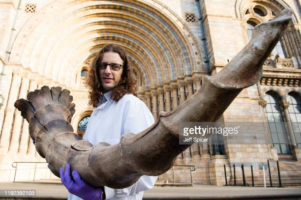 Roberto Portela Miguez and Efstratia Verveniotou scientists at the Natural History Museum collect an Erumpent horn for the Natural History Museum's...