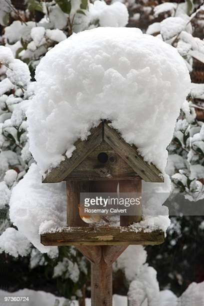 Robin on bird table after heavy fall of snow