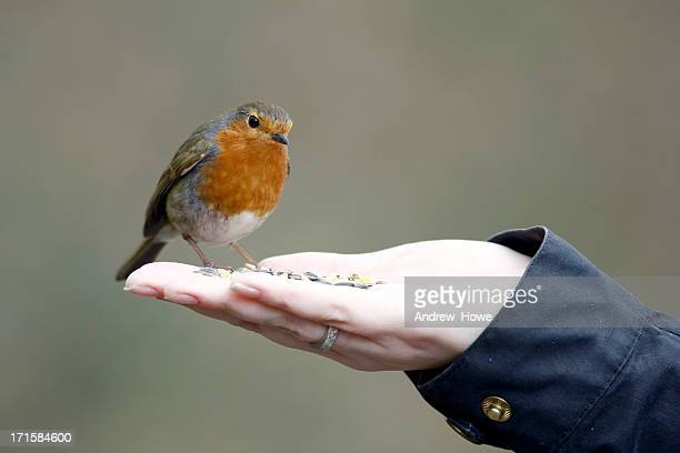 Robin on Hand