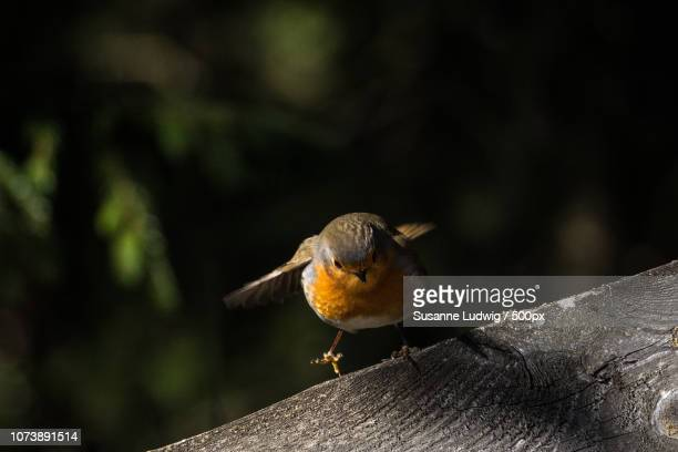 robin: take off