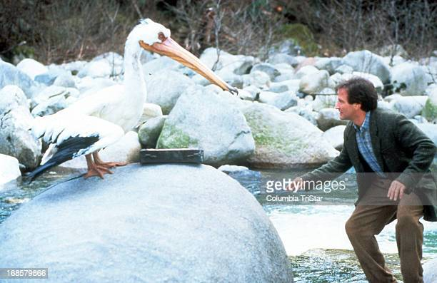 Robin Williams faces off with a herron in a scene from the film 'Jumanji' 1995