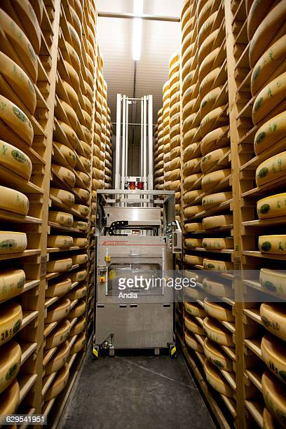 Robot used to make Comte cheese in a maturing cellar 'Mont Rivel' cooperative dairy in the Jura department