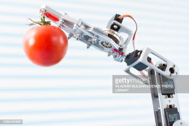 robotic arm holding tomato - genetic modification stock pictures, royalty-free photos & images