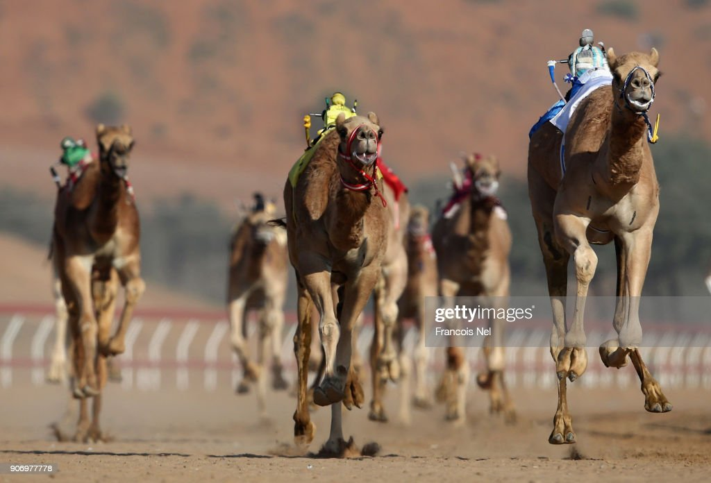 Camel Racing at Al Sawan Race Track