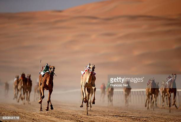 Robotic jockeys control camels during the Liwa Sports Festival at Moreeb Dune on January 3 2017 in Abu Dhabi United Arab Emirates