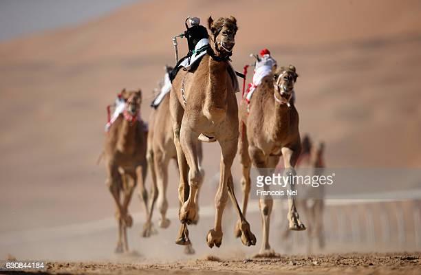 Robotic jockeys control camels during the Liwa Sports Festival at Moreeb Dune on January 3 2017 in Abu Dhabi United Arab Emirates