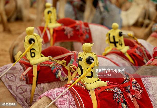 Robotic jockeys sit on camels waiting prior to the start of Al Marmoom Heritage Festival at the Al Marmoom Camel Racetrack on April 2 2015 in Dubai...
