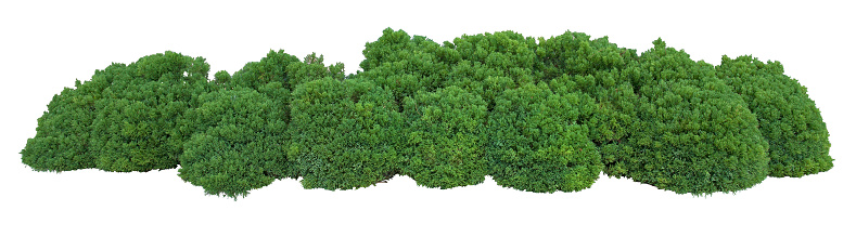 Robust bushes - best curb appeal you can do  463786711