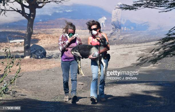 Robyn Phipps and Laura Horvitz help rescue a goat from a ranch near the Ronald Reagan Presidential Library in Simi Valley during the Easy Fire in...