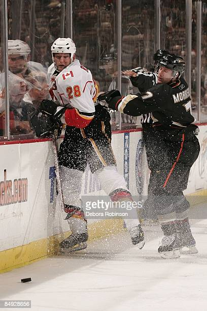 Robyn Regehr of the Calgary Flames is checked into the boards by Brendan Morrison of the Anaheim Ducks during the game on February 11 2009 at Honda...