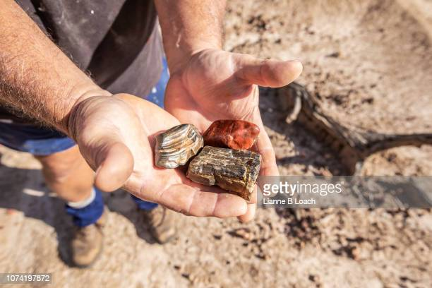 rock collecting 2 - petrified wood stock pictures, royalty-free photos & images