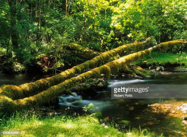 Rock Creek flows through Siuslaw National Forest; Florence, Oregon, United States of America