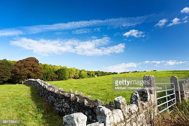Rock fence with metal gate and grassy hillside with cattle grazing, trees and blue sky and clouds, North of Kilrush