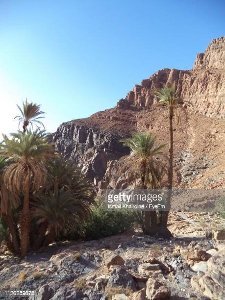 rock formation amidst trees against clear blue sky - ismail khairdine stock photos and pictures