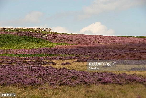rock formations of the burbage valley, derbyshire peak district - escarpment stock pictures, royalty-free photos & images
