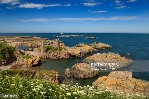 rock islands at boddam harbor north sea with orange lichen and queen annes lace on shore boddam aberdeenshire scotland uk - aberdeenshire stock pictures, royalty-free photos & images