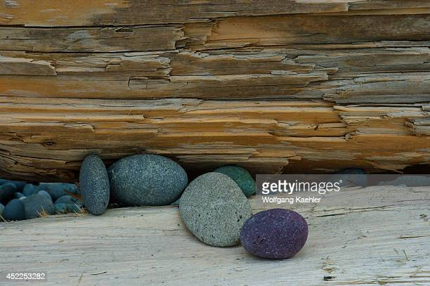 Rock pebbles on driftwood on Rialto Beach on the coast of the Olympic Peninsula in the Olympic National Park in Washington State USA