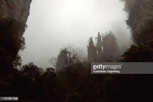 rock pillars in fog, cloudy weather, otherworldly views, hunan, china - argenberg stock-fotos und bilder