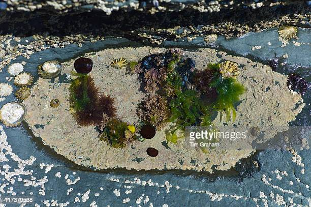 rock pool, west coast of ireland - limpet stock photos and pictures