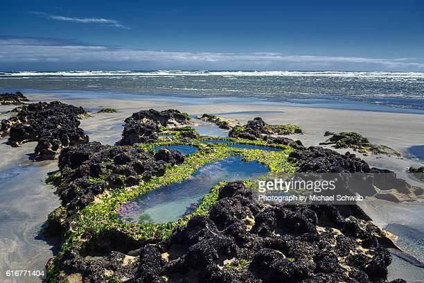 Rock pools, New Zealand