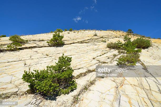 rock slope with shrubs in summer - alpes de haute provence stock pictures, royalty-free photos & images