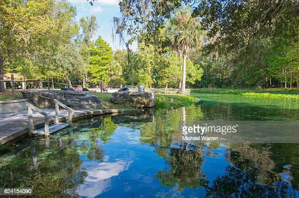 rock springs swimming hole - palmetto florida stock pictures, royalty-free photos & images