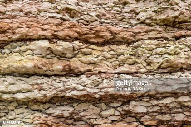 Rock strata in chalk cliffs