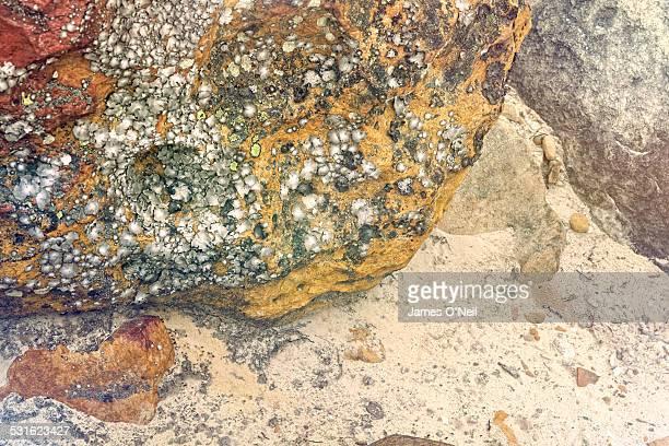 Rock Texture in Sand with lichen