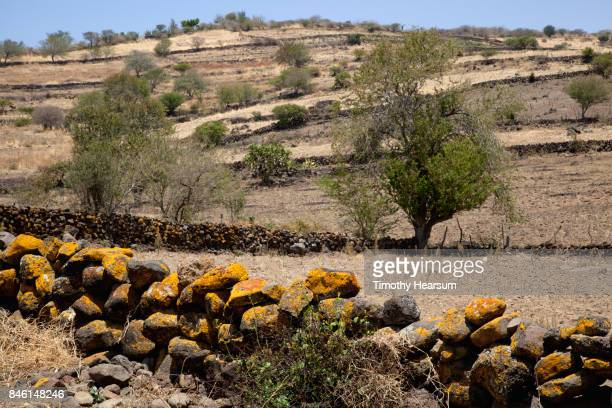 rock wall in foreground with desert plants on a terraced hillside beyond - timothy hearsum stock pictures, royalty-free photos & images