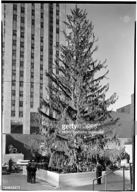 Rockefeller Center Inc 20 Rockefeller Plaza Christmas tree in Plaza from below